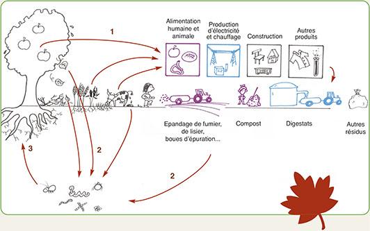 Les microorganismes végétaux de la gorge le moyen national